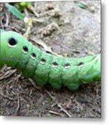 Curious Caterpillar Metal Print