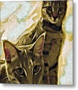 Curious Cats Metal Print by David G Paul