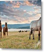 Curious Horses Metal Print