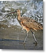 Curlew And Tides Metal Print