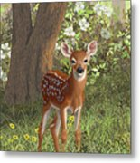 Cute Whitetail Fawn Metal Print by Crista Forest