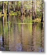 Cypress Trees Along The Hillsborough River Metal Print