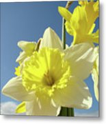 Daffodil Flowers Artwork Floral Photography Spring Flower Art Prints Metal Print