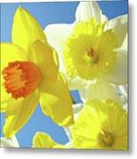 Daffodils Art Print Floral Sky Bouquet Daffodil Flower Baslee Metal Print