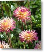 Dahlia Garden Floral Pink Yellow Botanical Landscape Baslee Troutman Metal Print