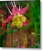Dainty Flower Metal Print