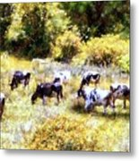 Dairy Cows In A Summer Pasture Metal Print