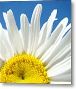 Daisy Art Prints White Daisies Flowers Blue Sky Metal Print