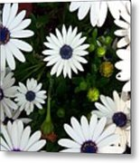 Daisy Forms II Metal Print