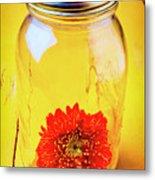 Daisy In Glass Jar Metal Print