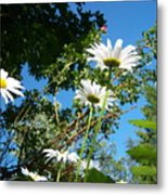 Daisy Rose Metal Print
