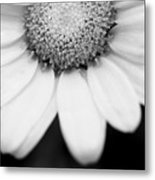 Daisy Smile - Black And White Metal Print
