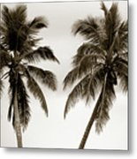 Dancing Palms Metal Print