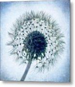 Dandelion In Blue Metal Print