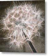 Dandelion In Brown Metal Print