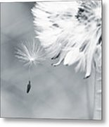 Dandelion Macro Make A Wish Metal Print