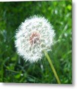 Dandelion Seeds 103 Metal Print