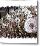 Dandelion Wishes Metal Print