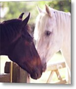 Dark Bay And Gray Horse Sniffing Each Other Metal Print