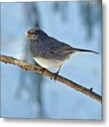 Dark-eyed Junco Or Snowbird - Junco Hyemalis Metal Print