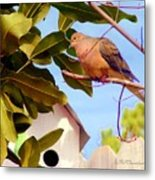 Darling Dove  Metal Print