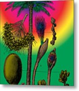 Date Palm Metal Print by Eric Edelman