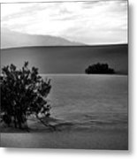 Death Valley Shrubs Metal Print