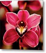 Deep Cut Orchid Society 15th Annual Orchid Show Metal Print by Dan Pfeffer