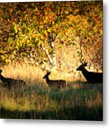 Deer Family In Sycamore Park Metal Print