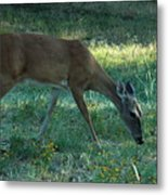 Deer Fields Metal Print