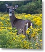Deer In A Field Of Yellow Flowers Metal Print