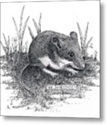 Deer Mouse Metal Print