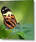 Delicate Butterfly Metal Print