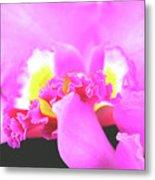 Delicate In Pink Metal Print