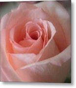 Delicate Pink Rose Metal Print