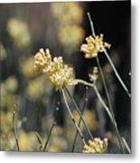 Desert Milkweed Metal Print