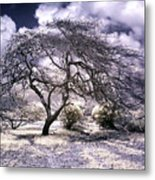 Desertic Tree Metal Print