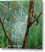 Dew Covered Spider Web Metal Print