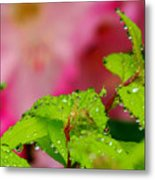 Dewdrops And Pastels Metal Print