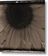 Diatrop Three Quarter Sunflower Metal Print