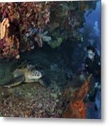 Diver And Sea Turtle, Manado, North Metal Print by Mathieu Meur