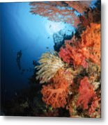 Diver Swims By A Soft Coral Reef Metal Print