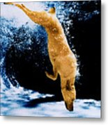 Diving Dog Underwater Metal Print