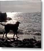 Dog On Beach Wc 2 Metal Print