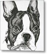 Dog Tags Metal Print