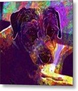 Dog Terrier Russell Pet Animal  Metal Print
