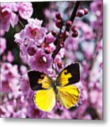 Dogface Butterfly In Plum Tree Metal Print