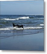 Dogs In The Surf Metal Print