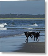 Dogs On The Beach Metal Print
