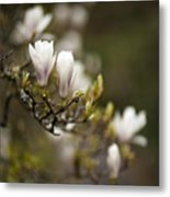 Dogwood Gathering Metal Print